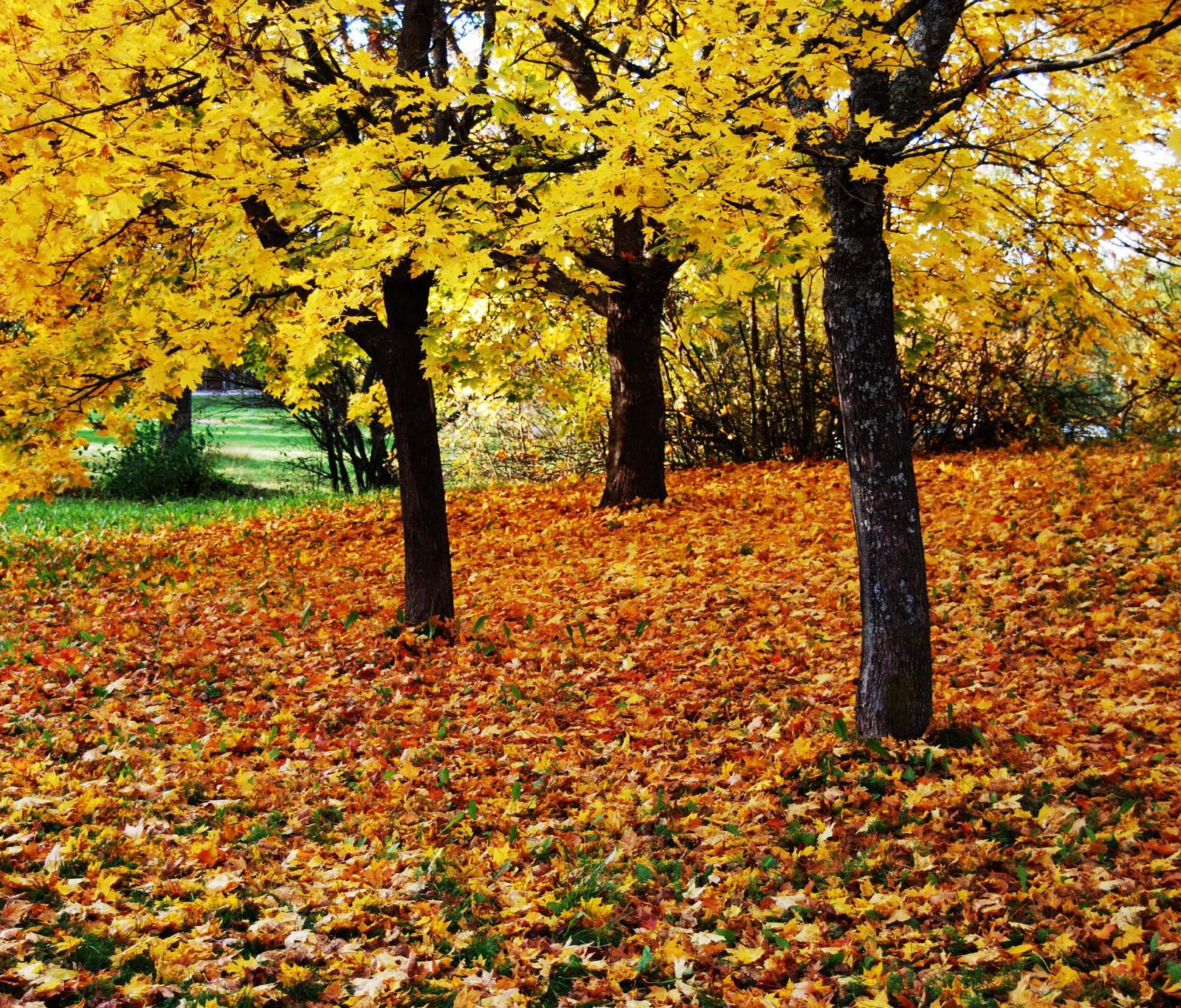 秋天的怀念图片