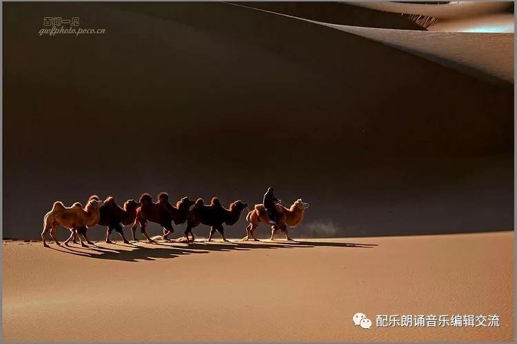 骆驼沙漠石头画