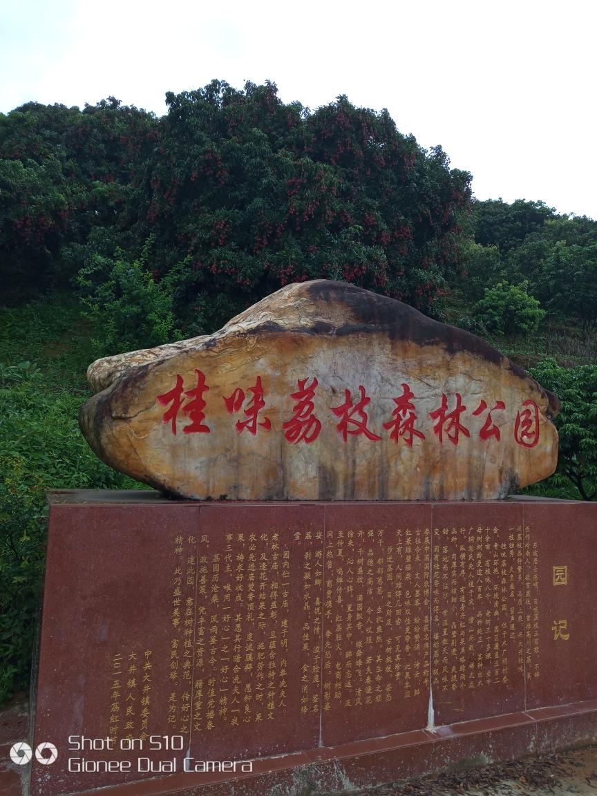 2018-6-21 高州大井镇木广垌 桂味荔枝森林公园