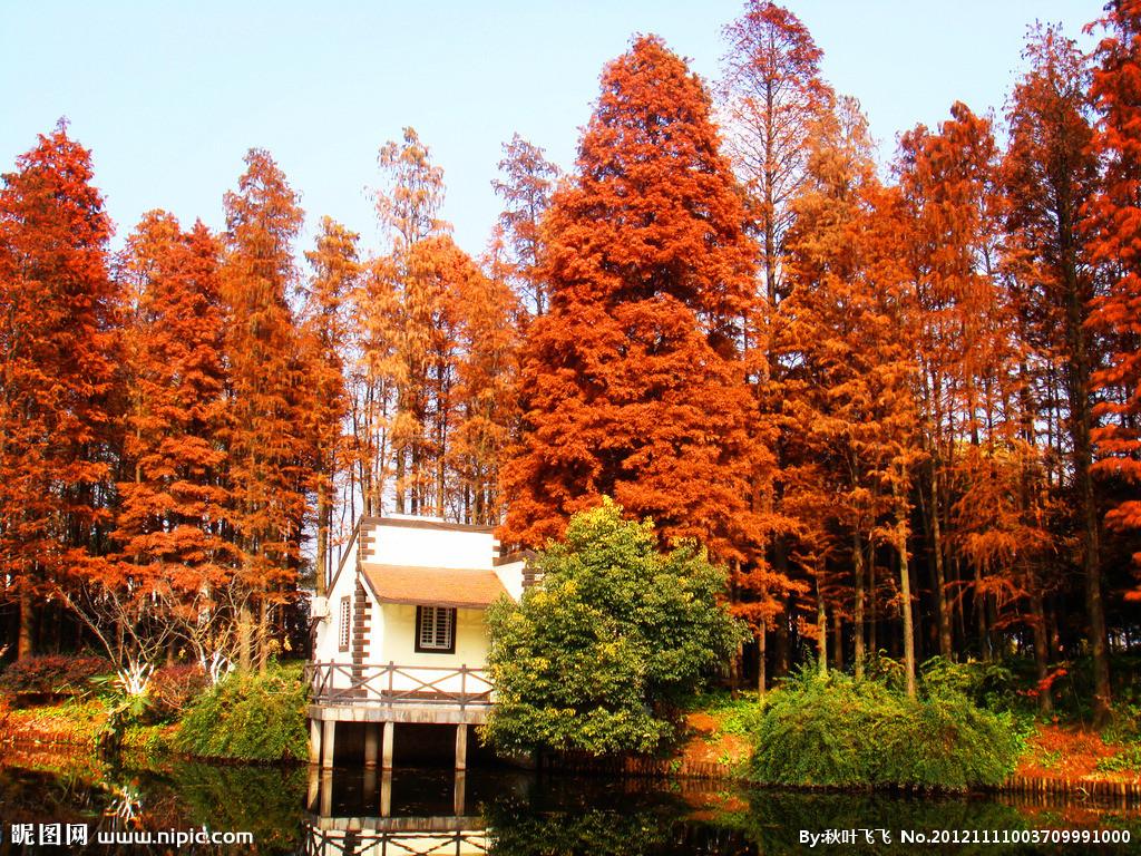 �:o�zke9olybdy��9��y.�9�$_2o19年1月9日去上海共青森林公园,风光无限.