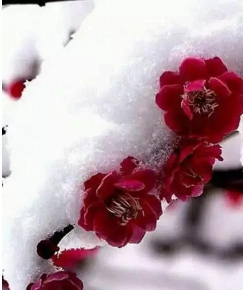 爱的雪花飘满冬季