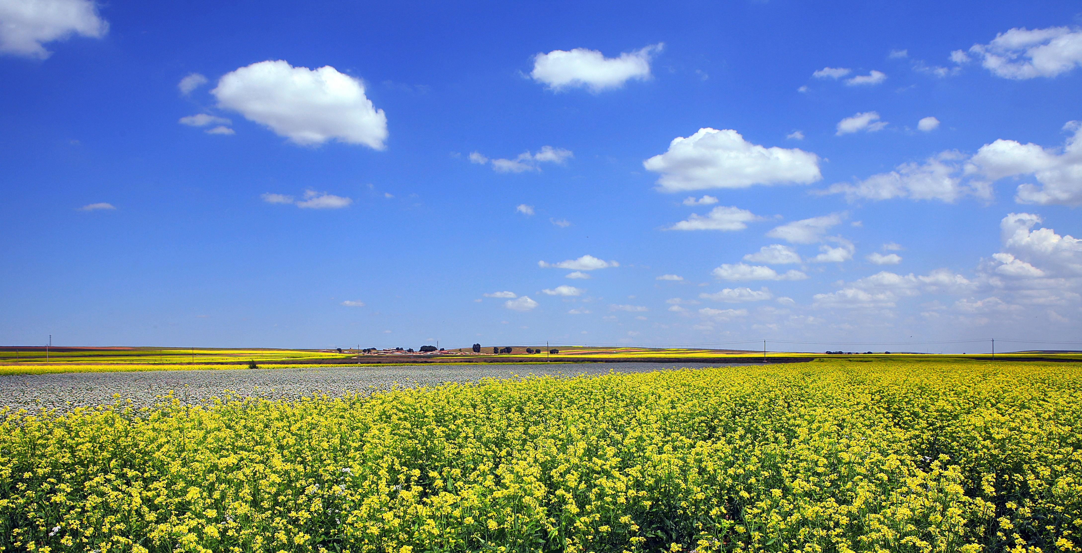 壁纸 草原 成片种植 风景 植物 种植基地 桌面 4355_2224