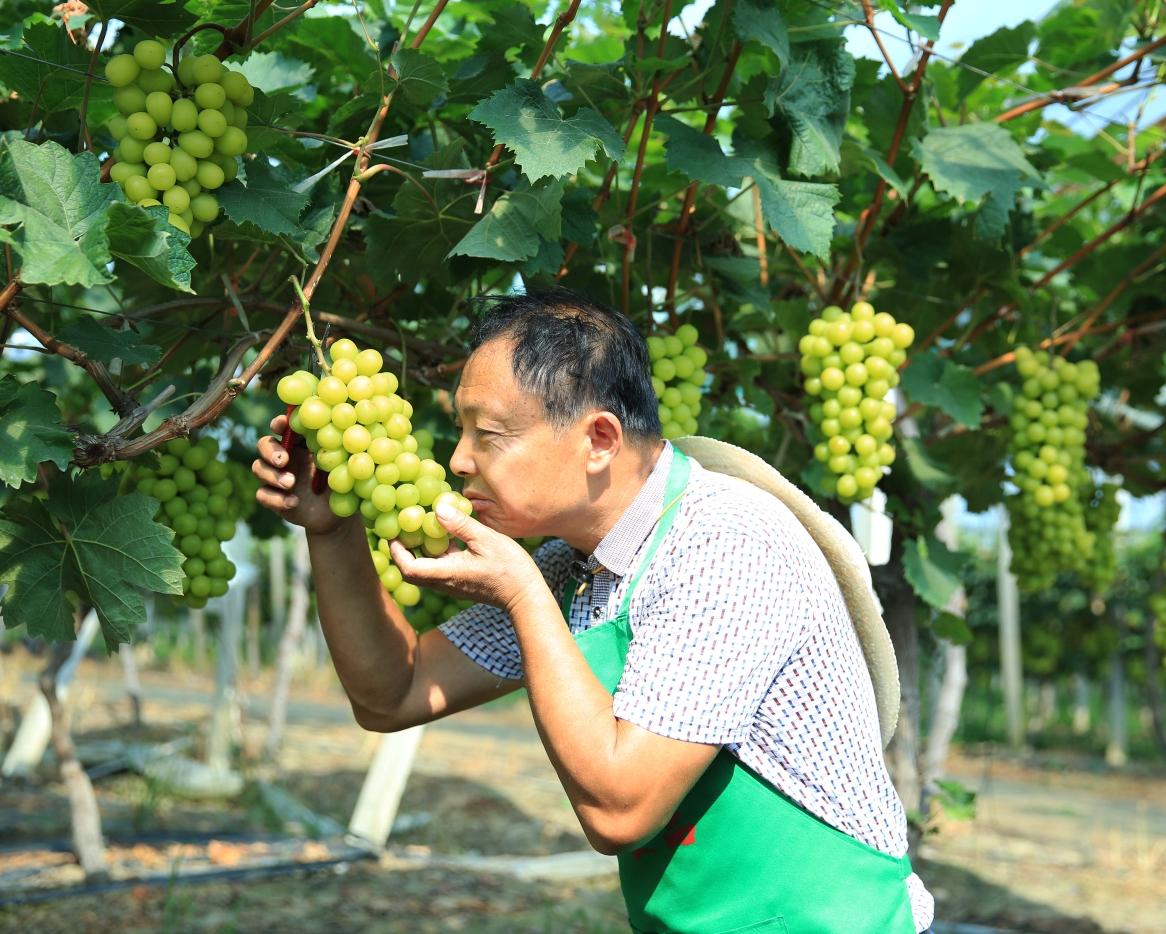 香港黄页色小�_韩珠葡萄园风情
