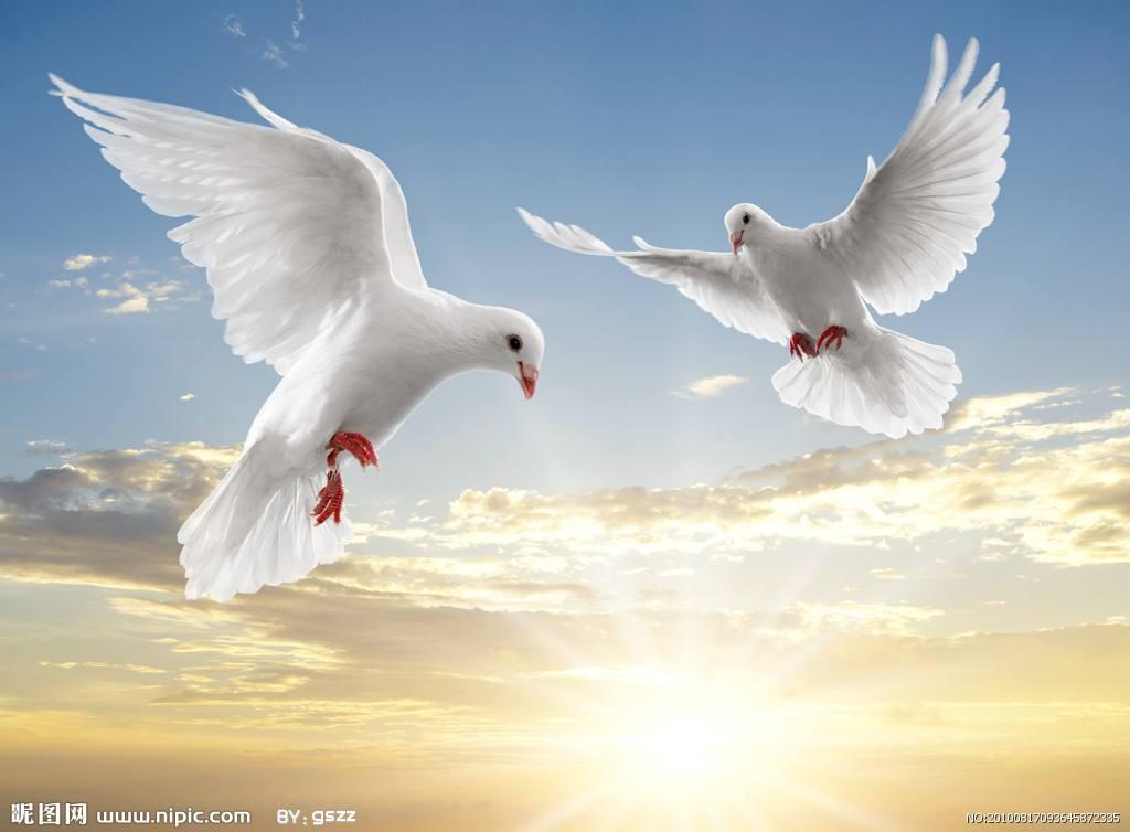 《永生的和平鸽》