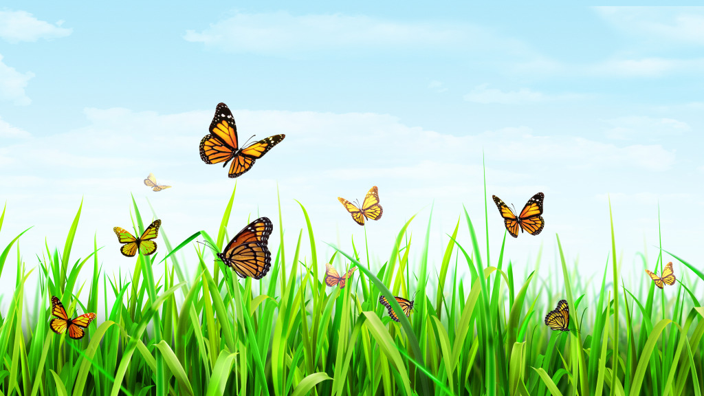 最美的蝴蝶风景图片